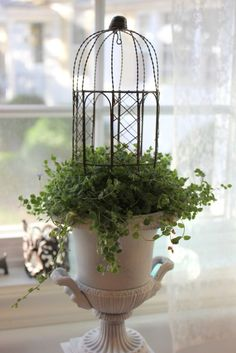 indoor tiny gazebo~get these in the fairy section of the advanced nurseries like Mahoneys!