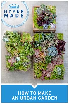 Transform your cityscape into a lush garden landscape by creating these vertical wall planters. TIP: For best results, allow one to two weeks for the succulents to take root in the planter before hanging them on your porch.