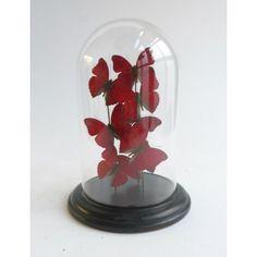 Antieke glazen vlinderstolp
