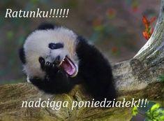 Ratunku!!! Nadciąga poniedziałek!!! #jutroponiedzialek