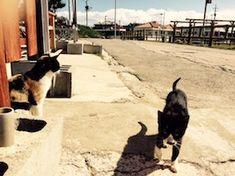 久高島の猫 沖縄:seymour's garden:So-net blog