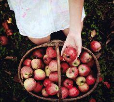 apple picking. ♡