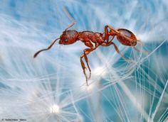 Ant by Ondrej Pakan, via 500px
