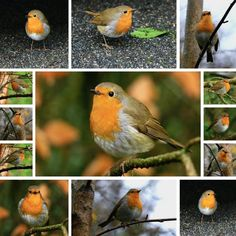 My life with Robins!