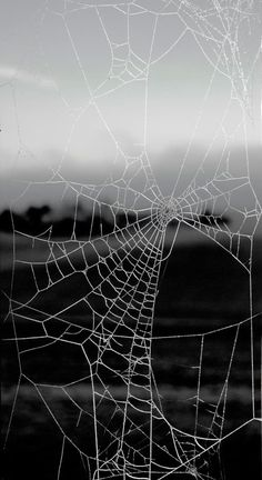 Nature's Networking in Winter - Spider Web - Spinnennetz - toile d'araignée