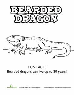 Worksheets: Bearded Dragon Coloring Page