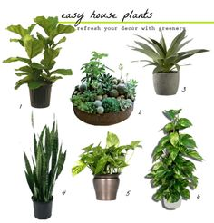 plant | Killer House Plant Warning | love flowers and plants ...