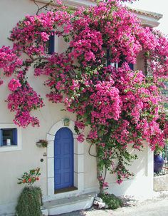 a MOST POPULAR RE-PIN: Greek Home with plant - a Pink Bougainvillea bush tree at the arch entrance way. Boho European design architecture with cornflower blue front door. Moroccan interior design. Gorgeous FLOWERS BEYOND EXPECTED - https://www.pinterest.com/DianaDeeOsborne/flowers-beyond-expected/ - though I'd been intrigued by the White & Blue INTRIGUING ARCHITECTURE - https://www.pinterest.com/DianaDeeOsborne/intriguing-architecture/ and pinned it there. #DdO:)