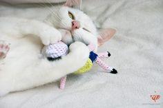 Die 88 Besten Bilder Von Häkeln Für Katzen Stricken Für Katzen
