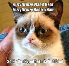 #grumpycat #cats #kittens #pets #animals #funny