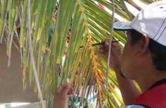 #Definen en Cuba estrategia de manejo para eliminar especie exótica invasora - Radio Santa Cruz (Comunicado de prensa): Radio Santa Cruz…