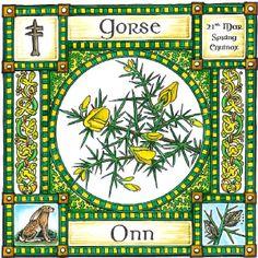 22nd Dec CELTIC PAGAN Birthday OGHAM WICCAN ELDER TREE GREETING CARD 25th Nov