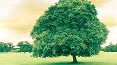 Creative Tree!