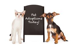 How to Prepare for Your Newly Adopted Pet