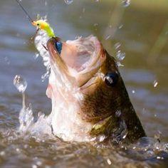 Cómo pescar más con señuelos crankbaits, trucos y consejos - EsPesca