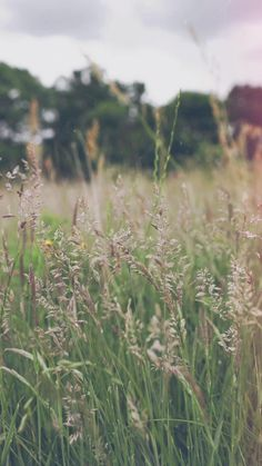 Aesthetic Photography Nature, Nature Aesthetic, Aesthetic Movies, Nature Photography, Green Background Video, Love Background Images, Background For Photography, Photography Backgrounds, Beautiful Nature Scenes