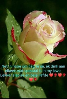 Goeie Nag, Goeie More, Good Night Quotes, Special Quotes, Flowers, Plants, Afrikaans, Rose Buds, Planters