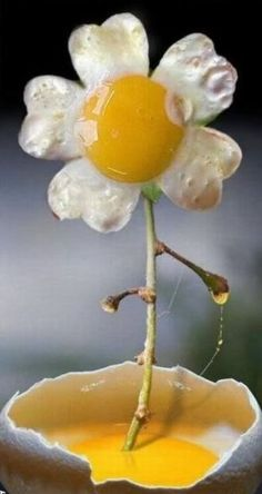 eggflower