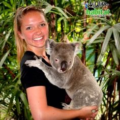 Holding a cuddly koala is just one of the many amazing things you can do when you study abroad in North Queensland!