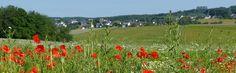Webcam Rengsdorf in das Neuwieder Becken