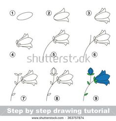 Step by step drawing tutorial. How to draw a Bluebell flower – … Step by step drawing tutorial. How to draw a Bluebell flower – stock vector Drawing Lessons, Drawing Techniques, Drawing Practice, Art Lessons, Doodle Drawings, Doodle Art, Drawing Sketches, Sketching, Drawing Drawing