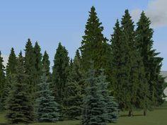 Vegetations-Set Nadelbäume und tropische Pflanzen