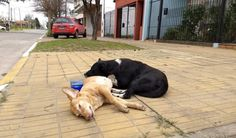 Uma história emocionante: cão fiel passa a noite cuidando do corpo da companheira morta em atropelamento! | Cura pela Natureza