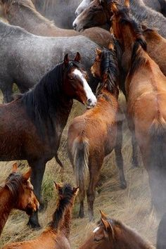 Wild Kaimanawa horses