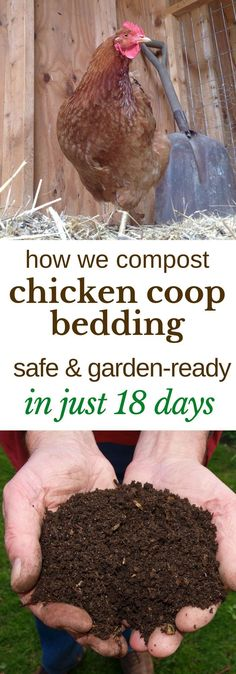 Here's how we turn the deep litter from our chicken coop into safe, garden-ready compost, in just 18 days. #gardening #compost #chickens #backyardchickens #composting #permaculture #modernyardchickencoops