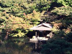 #momiji, #maple, #autumn leaves, #carp, #pond,