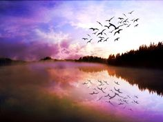 un vol/ une volée d'oiseaux (sauvages)