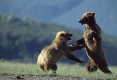 Las peleas más salvajes entre animales... salvajes | Curiosidades, Dogguie.net
