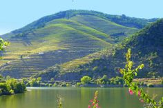 Alongside the Douro valley