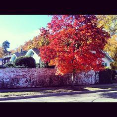 #norman #oklahoma #fall #autumn #october #campus #ou #sooners @Oklahoma Sooners