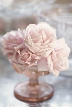 Ravishing Blush Pink Roses