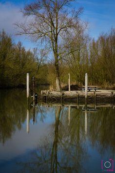 De biesbosch in Dordrecht