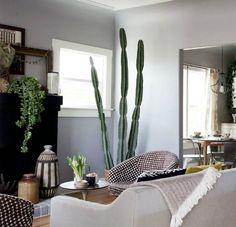 grote cactus