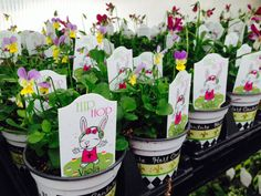 Annuals are now available at Winterberry Gardens - Southington, CT. www.winterberrygarden.com
