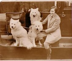Miss Perry arriving at the Kensington Canine Show at the Crystal Palace, sometime in the early 1930s.  OK, a dog show isn't that strange a place for a Samoyed, I just like seeing them in the car. My first Sam loved car rides :)