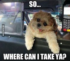 """""""So...Where can I take ya?"""" Gotta love the Marnie dog! She is so cute. Just makes me smile!"""