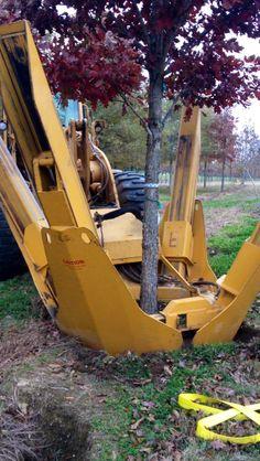 """65"""" Tree Spade Digging 6"""" White Oak https://www.facebook.com/w1k.cosmology"""