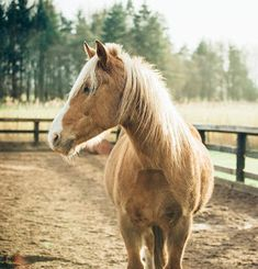 Making sure your horse's stable is cleaned properly will help ensure your horse's health stays on top form. I stick to a schedule . Show Jumping Horses, Show Horses, Horse Stables, Horse Barns, Horse Tack, Horse Riding Tips, Horse Care Tips, Free Horses, All About Horses