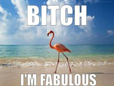 Fabulous flamingo.