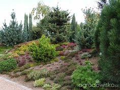 Spotkanie w ogrodach Kapias 10.10.2015 - strona 6 - Forum ogrodnicze - Ogrodowisko