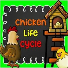 "My Chicken Life (Cycle) - a 51 page mini-unit for teaching the chicken life cycle from egg to chicken. This unit is perfect for any primary classroom.*Retelling pieces - to ""act out"" the chicken life cycle*Chickens can/have/are chart*Chickens know/wonder/learned chart*Chickens can/have/are flip book*Chicken and Chicken Egg posters*Chicken and Chicken Egg labeling sheets*How a Chick Grows Poster*Chicken Life Cycle poster (color and black/white)*Chicken Life Cycle cut and paste sequencing…"