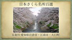 【(Japan)日本さくら名所百選】五条川(愛知県岩倉市・江南市・大口町)[Beautiful cherry blossoms in Japan]