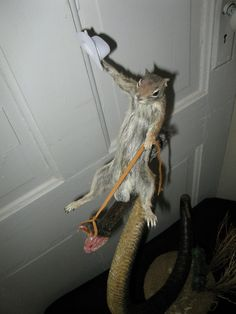 taxidermied rodeo squirrel riding a rattlesnake