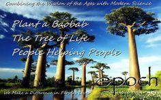 50 pcs rare africa tree baobab seeds high-quality rare baobab seeds tropical plant giant tree seeds for home garden planting Le Baobab, Baobab Tree, Plantas Bonsai, Giant Tree, Big Tree, Bonsai Plants, Bonsai Garden, Trees And Shrubs, Trees To Plant