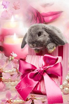 Pretty in Pink Easter Bunny easter easter eggs easter decorations easter bunny easter quote happy easter easter gifs easter greeting easter wishes happy easter friends and family animated easter wishes quotes Pretty in Pink Easter Bunny Cute Baby Bunnies, Cute Baby Animals, Pretty In Pink, Easter Bunny Pictures, Gato Gif, Easter Quotes, Easter Wishes, Paws And Claws, Happy Easter