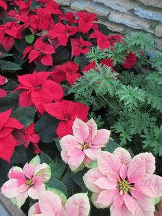 December - Winter color